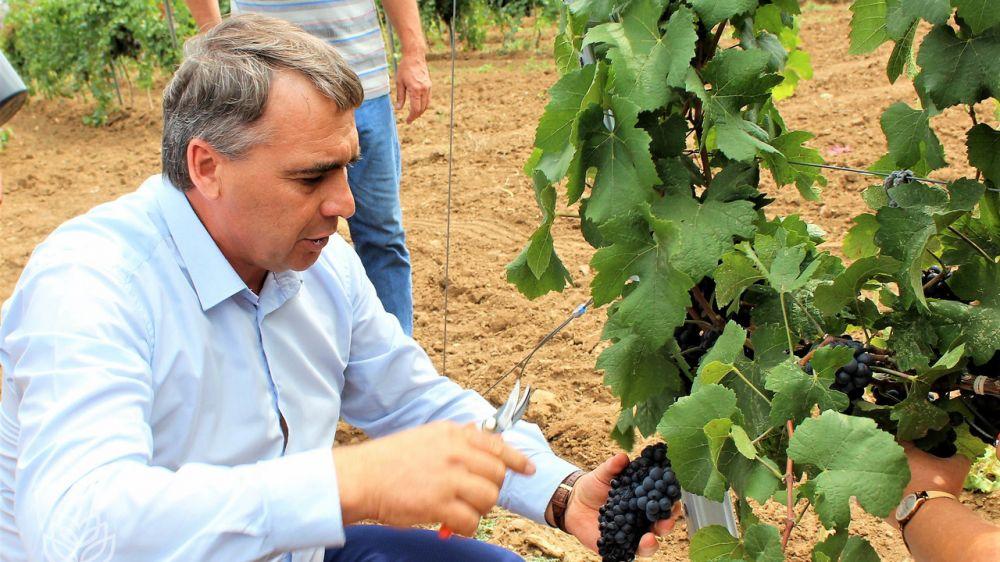 Андрей Рюмшин принял участие в старте уборочной кампании винограда в Бахчисарайском районе