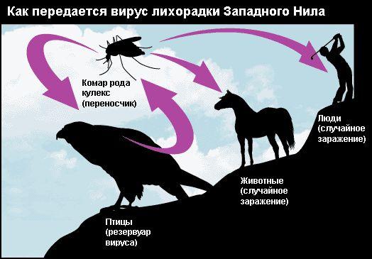 В Белогорском районе выявили случаи заболевания лихорадкой Западного Нила