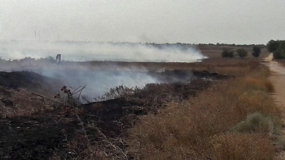 С начала лета крымские огнеборцы около 1200 раз боролись с возгораниями сухой растительности на полуострове