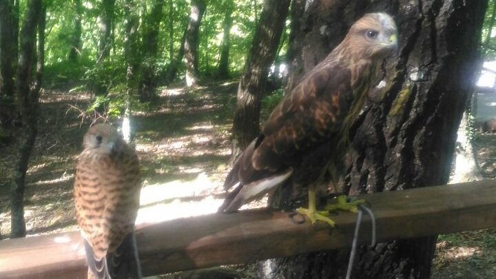 Сотрудники Минприроды Крыма изъяли у фотографа краснокнижных птиц