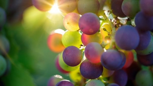 Господдержка виноградства и виноделия в Крыму составила 1,2 млрд рублей