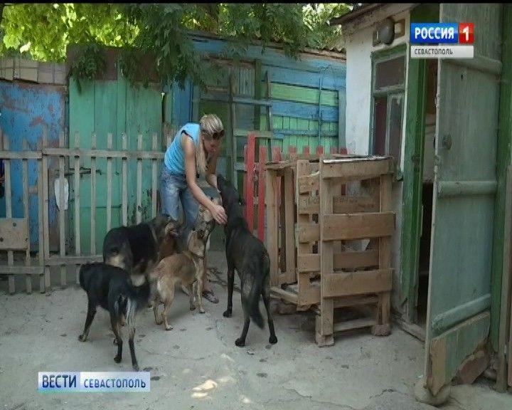 В Севастополе требуют ужесточить закон о собачьих приютах