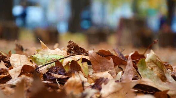 Уборка опавшей листвы началась в Симферополе