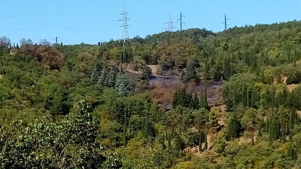 Минприроды Крыма информирует о ликвидации лесного пожара в Алуште