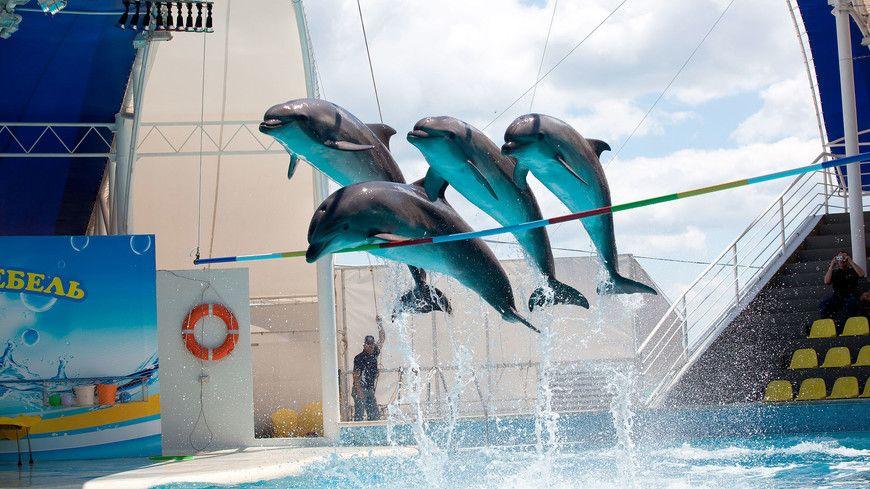 Специалисты отдела ветеринарии города Феодосии провели проверку дельфинариев в городе Феодосия