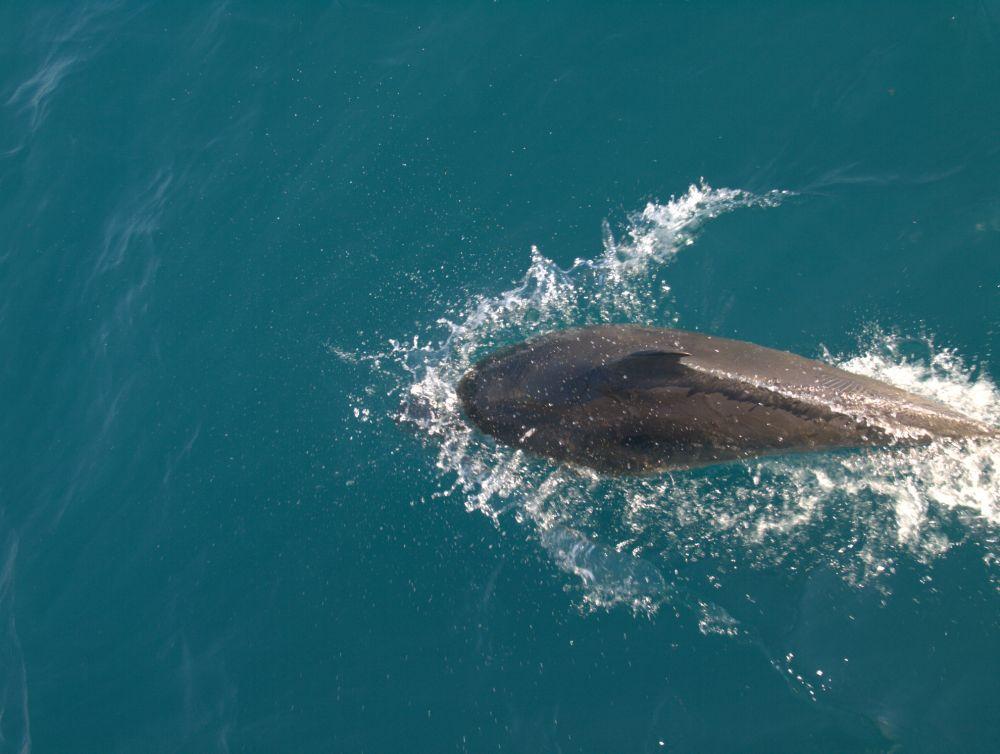 Прокуратура привлекла к админответственности директора дельфинария в Феодосии