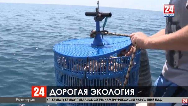 Производители морепродуктов в Крыму жалуются на огромные штрафы от надзорников