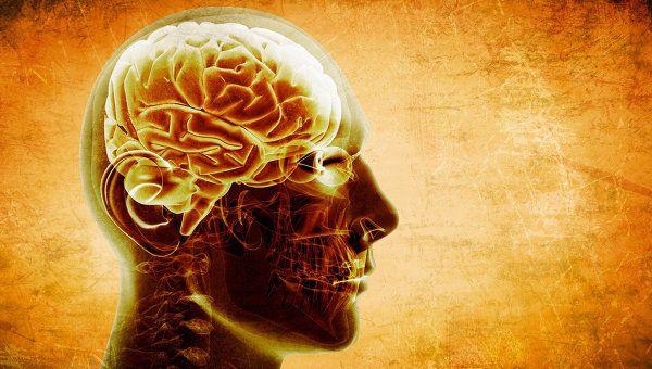 Диетолог назвал крайне необходимый для мозга продукт