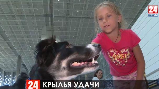 Четвероногий страж: как собака Алиса несёт службу в аэропорту Симферополя