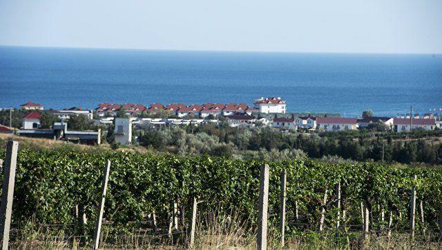 Крымские виноделы оценили новые законы о поддержке виноградарей