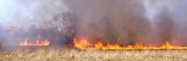 Под Симферополем за сутки несколько раз горели поля