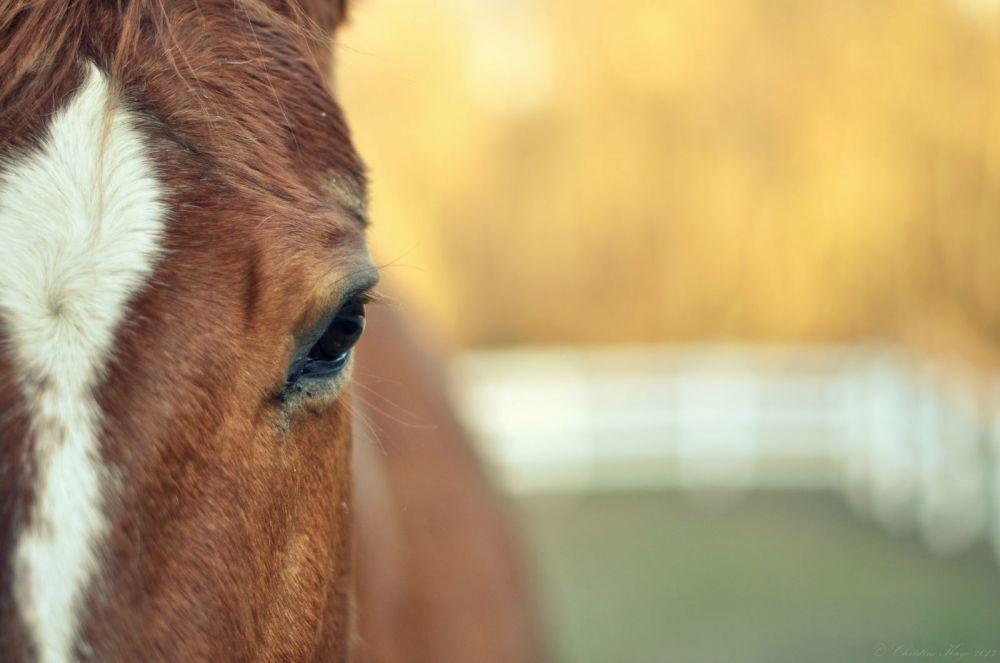 Лошадь лягнула девочку в лицо в чистом поле