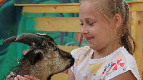 Владельца контактного зоопарка в Коктебеле накажут за нарушения при содержании животных