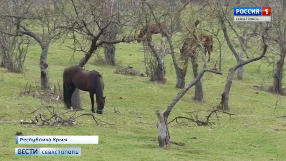 Следователи устанавливают обстоятельства, при которых лошадь лягнула ребёнка в лицо