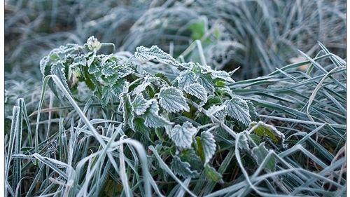 МЧС: Экстренное предупреждение о заморозках на 21-22 сентября