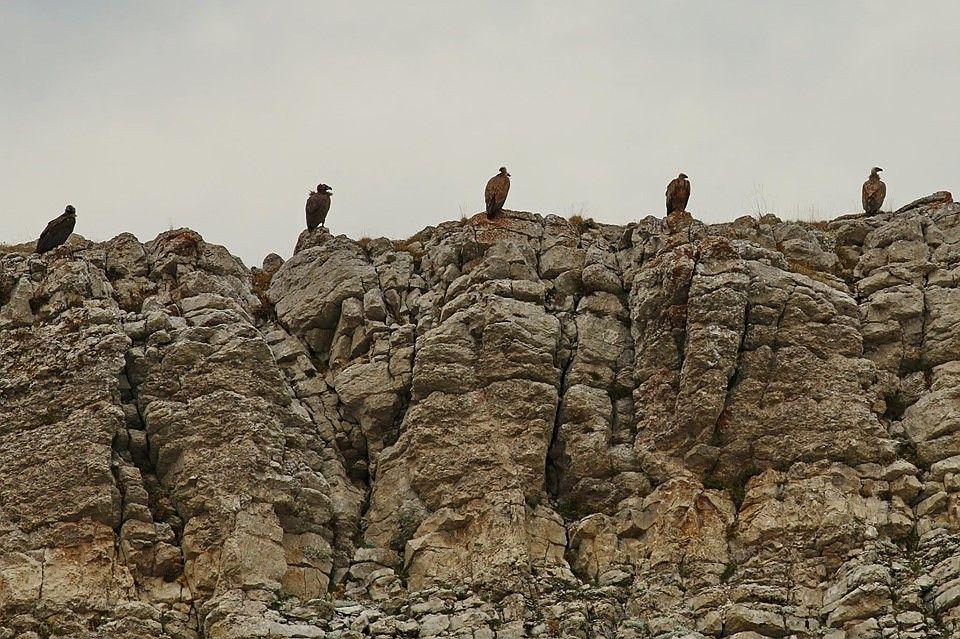 птицы в горах крыма девушка показывала