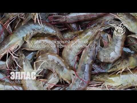 Производство креветки в Крыму будет значительно увеличено в 2020 году – Аксёнов