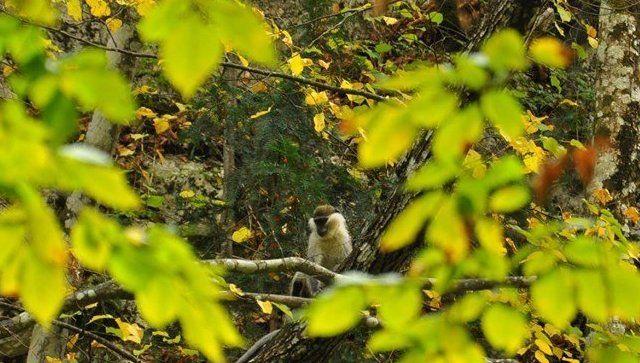 #Народнаясводка: обезьяна в горах Крыма становится местной диковинкой