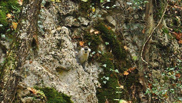 Эксперт рассказал, чем грозит обезьяне жизнь в горах Крыма