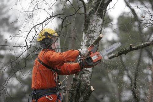 В Симферополе за неделю провели обрезку 40 деревьев