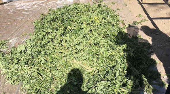 Житель Красноперекопского района хранил дома более 12 кг конопли