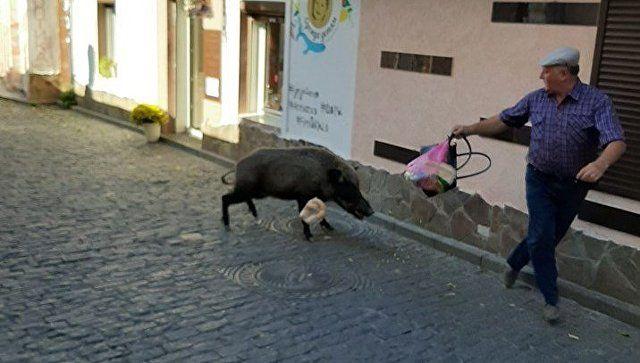 По улицам Гурзуфа бегает дикий кабан и нападает на людей. Фотофакт