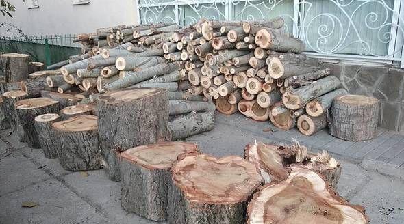 Семья известных медиков вырубила деревья в Симферополе под парковку для частной клиники