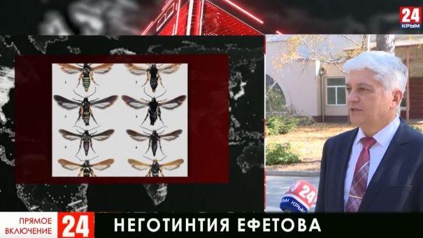 В Крыму обнаружили новый вид насекомых
