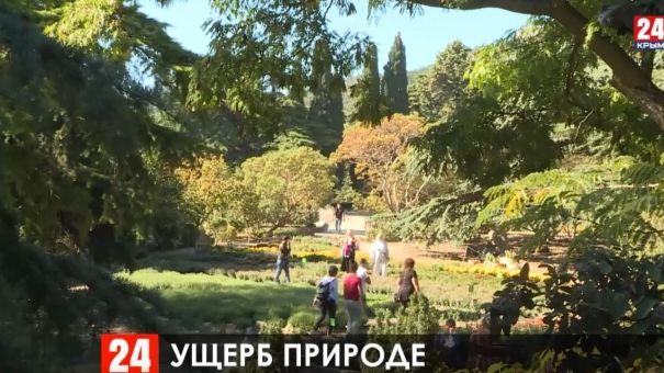 Возле Большой Ялты уничтожили деревья фисташки туполистной