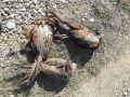 В Бахчисарайском районе задержали браконьеров с тремя тушками фазанов