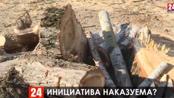 Хотел как лучше: в Симферополе бизнесмен ответит за вырубку деревьев