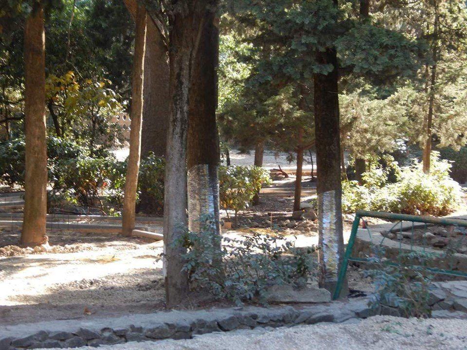 Фотофакт: в Ялте деревья обертывают пищевой пленкой