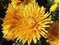 Все в Сад, господа: 50 тысяч цветов ждут восхищения жителей и гостей Ялты
