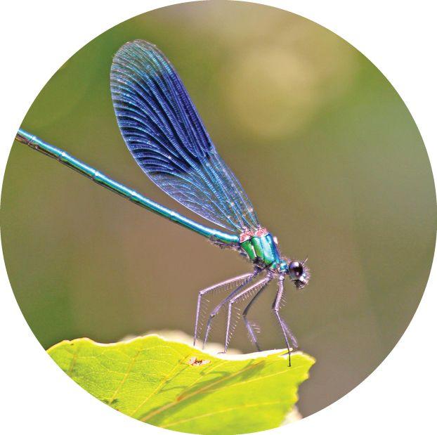 Редкие бабочки и стрекозы, которых можно встретить в Крыму