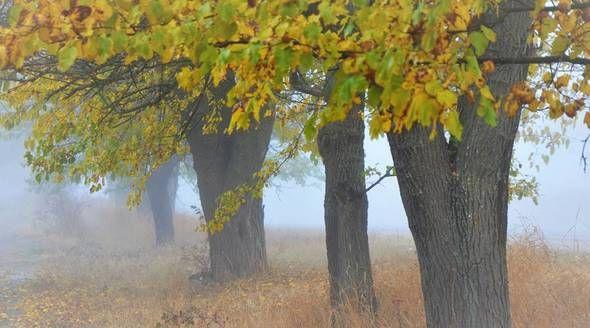 Похолодание ожидается в Крыму к концу октября