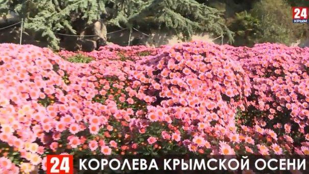 В Никитском ботаническом саду представили около 500 сортов хразантем