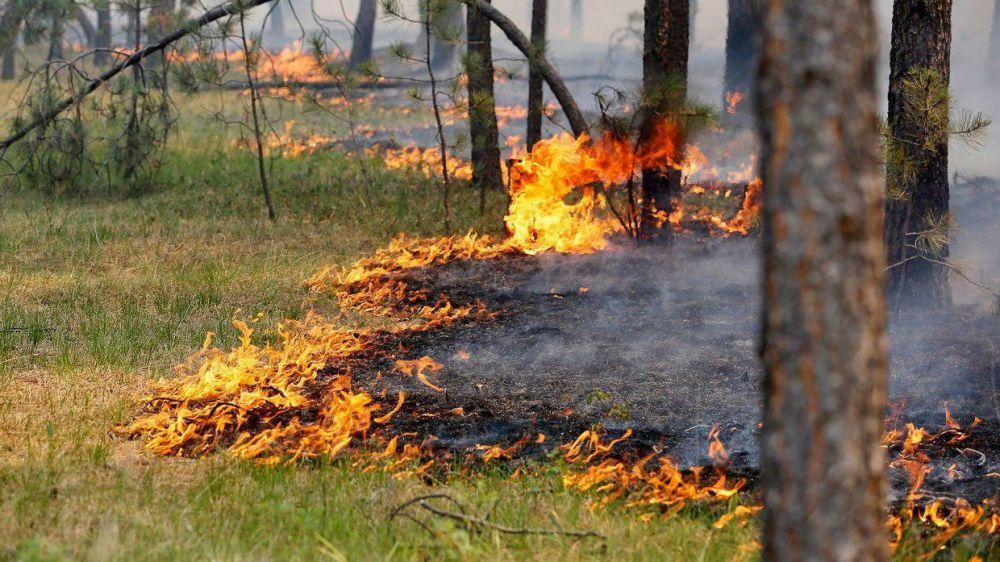 Площадь пожара в лесхозе Симферопольского района увеличилась в четыре раза