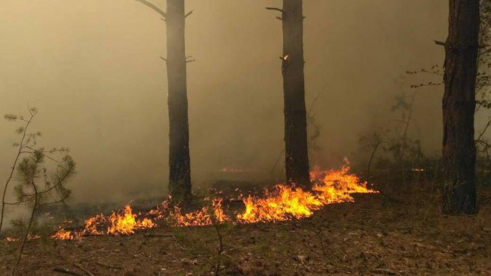 Информация о возгорании лесном пожаре в Симферопольском районе