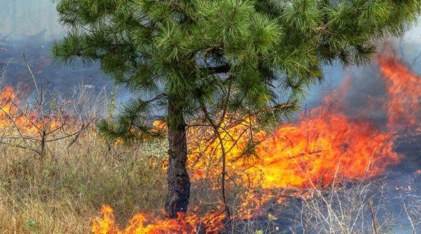 Спасатели локализовали лесной пожар под Симферополем