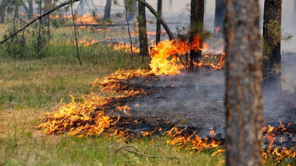 Под Симферополем горит лес