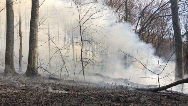 В Крыму начался еще один крупный пожар, леса закрыты для посещения