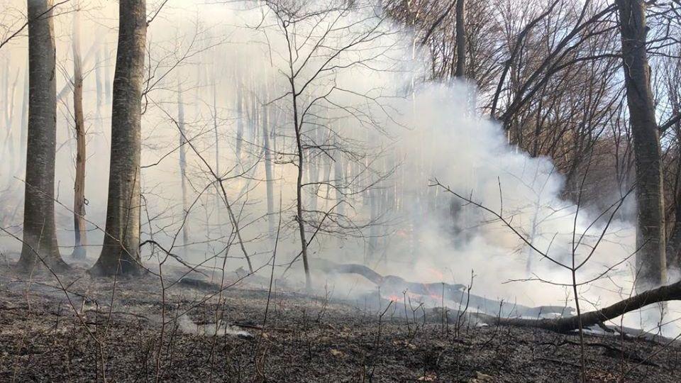 Геннадий Нараев: Сегодня на территории Симферопольского лесничества возник ещё один лесной пожар