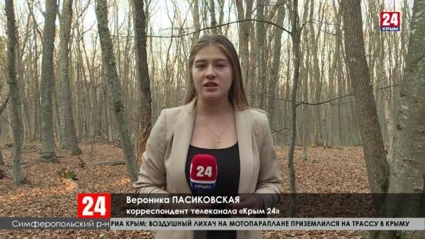 Новое возгорание леса на Долгоруковской яйле. Огонь локализован