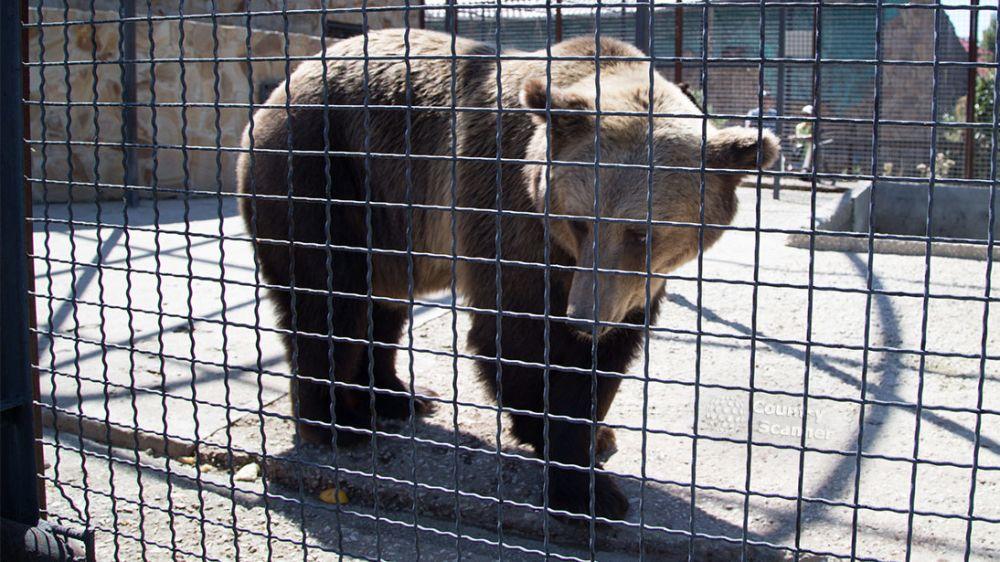 Минприроды Крыма в связи с заявлением владельца «Сафари-парк «Тайган» об отстреле «лишних» медведей информирует