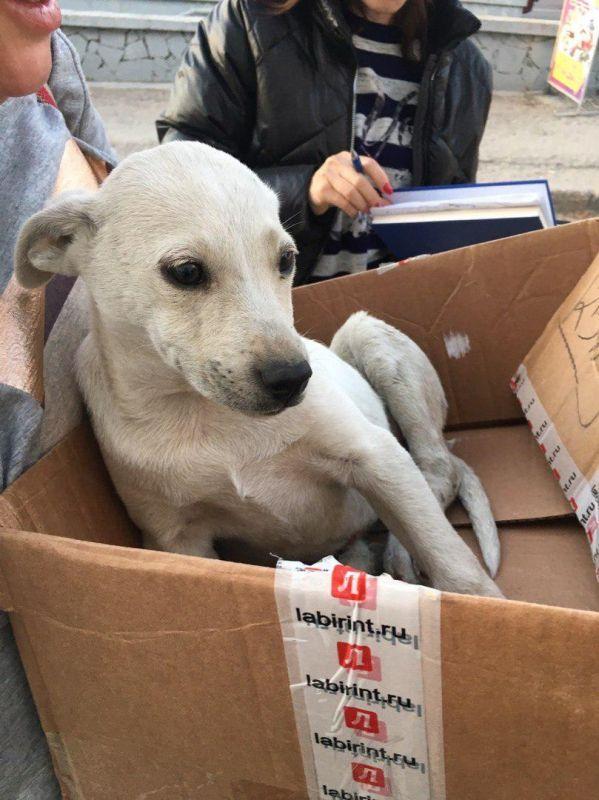 За сбитую собаку в Симферополе водителя сурово наказали