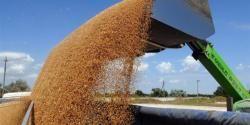 Порядка 5 тыс крымского зерна отправится в Сирию