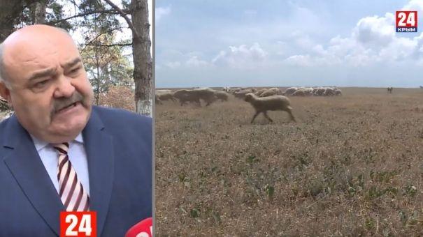 Учёные Крыма разрабатывают новые проекты в животноводческой отрасли