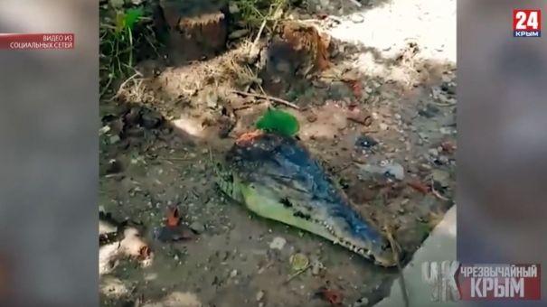 """Крокодильи головы, коррупционеры и """"перевернувший"""" легковушку кабан: подборка ЧП в Крыму"""