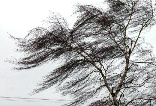 22 ноября в Симферополе ожидается очень сильный ветер