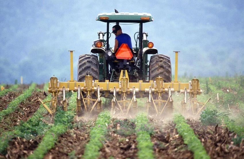 Учёные рассказали, каким будет урожай озимых в Крыму